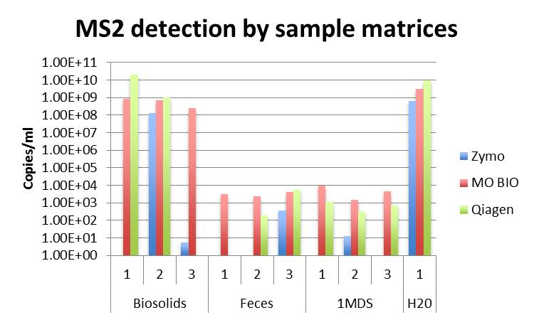 MS2 detection by sample matrices